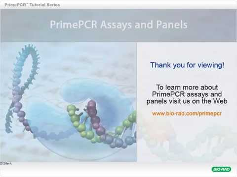 PrimePCR™ Assays: Build a Custom Plate (Blank Template)