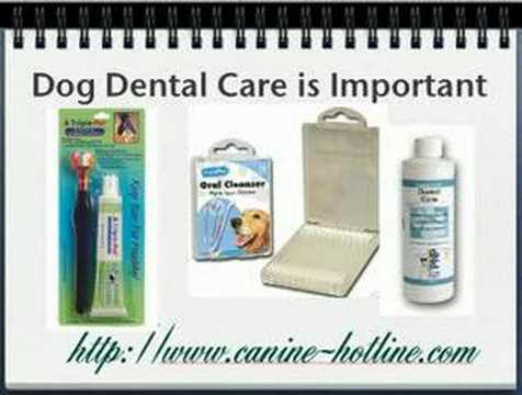 Dog Oral Hygiene - Dog Dental Care - Dog Tooth Care