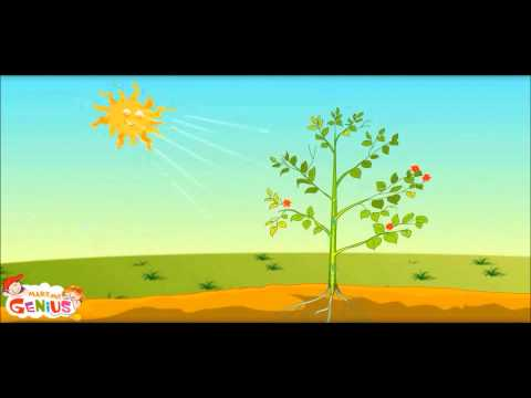 How Plants Make Food -Ep.1 -School Education Video
