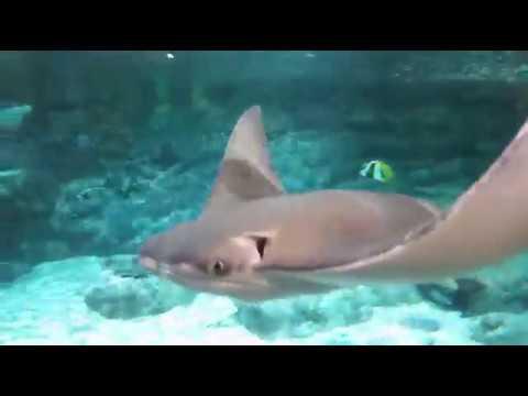 The Grand Aquarium Ocean Park Hong Kong