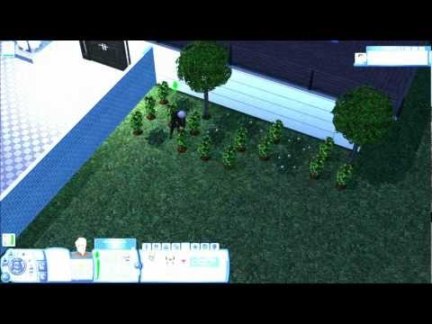 Sims 3-Immortality Step One-Life Fruit