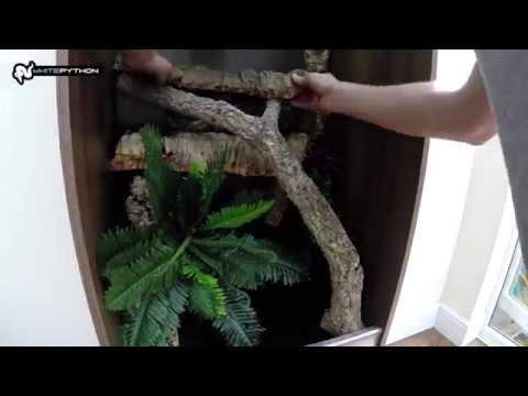 Jungle Terrarium Set-up for Arboreal Reptiles