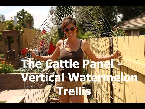 How to Make A Watermelon Garden Arch Trellis from a Cattle Panel