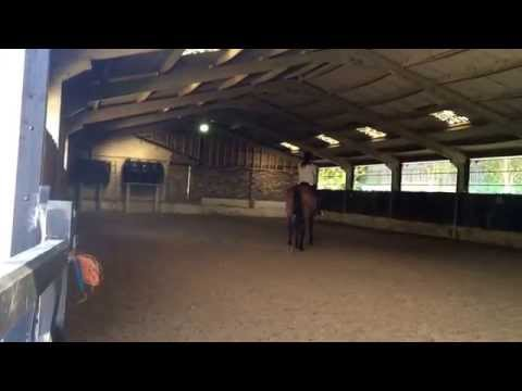 Bamba and I learning our dressage test :)
