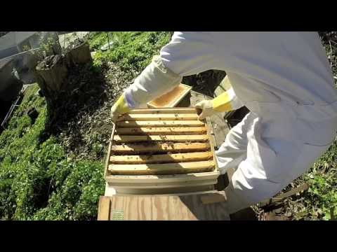 Backyard Beekeeping  First Inspection of 2015