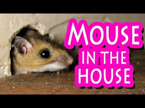 Mouse exits perfect mouse hole to get the cheese