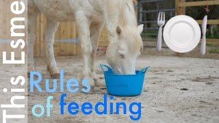 Feeding   Horse care   This Esme