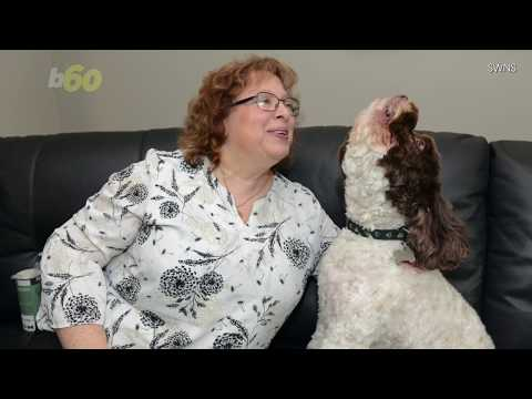 Adorable Dog Sings Whenever His Owner Says I Love You