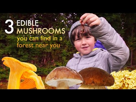 3 delicious edible mushrooms you can find in forest near you