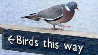 FUNNIEST and CRAZIEST BIRDS of 2021!