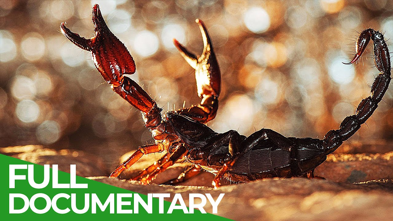 Lethal Poison | Animal Armory | Episode 4 | Free Documentary Nature