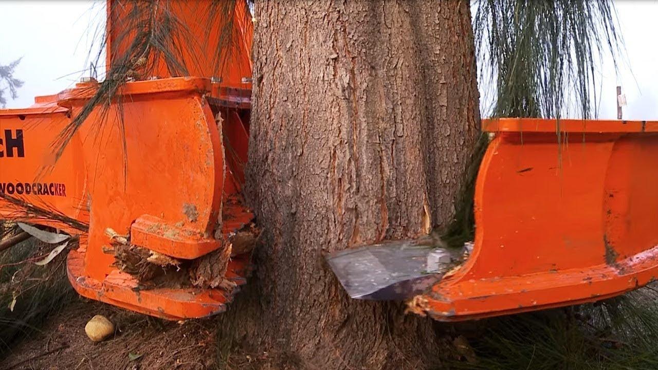 Incredible modern big wood cutting machines I ever seen. Amazing wood processing & sawmill equipment