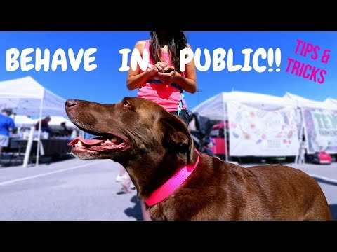 Do THIS Before Taking Your Dog in Public + Tips & Tricks!