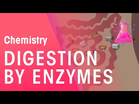 Digestion by enzymes | Chemistry for All | The Fuse School