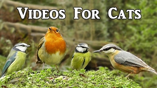 Videos for Cats to Watch : Little Birds Spectacular