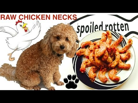 How to make RAW CHICKEN NECKS FOR DOGS DIY RAW Dog Food - a tutorial by Cooking For Dogs