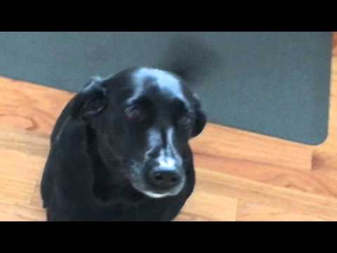 Super obedient dog stops wagging tail on command