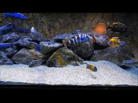 How to keep your African tank crystal clear