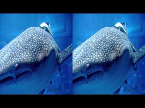Sony Bravia 3D TV Demo 3D Video - Aquarium 3D.mp4