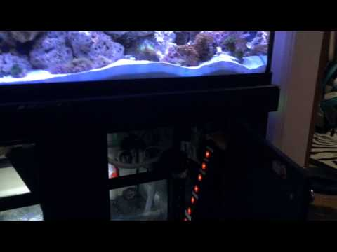 75 Gallon MARINELAND Reef build- Complete  System Tour