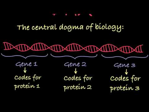 Introduction to Genetic Terminology