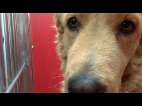 8 Pima Animal Care Center Doggies on 2-9-18 Puka-Penelope-Winston-