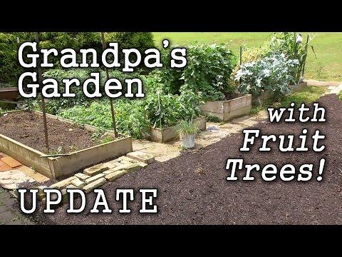 Raised Beds & Edible Landscape -Grandpa's Garden (Year 2) +Fruit Trees!