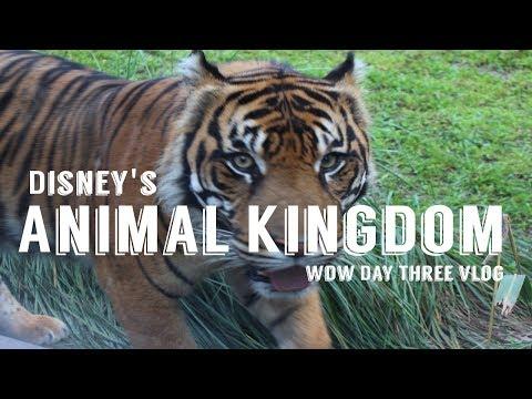 Disney's Animal Kingdom! Walt Disney World Day Three June 2017