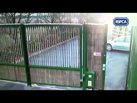 Pup dumped at RSPCA Birmingham Animal Centre