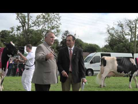 Diageo Baileys Cow Competition- Virginia Show