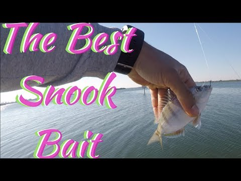 How to catch Pinfish!