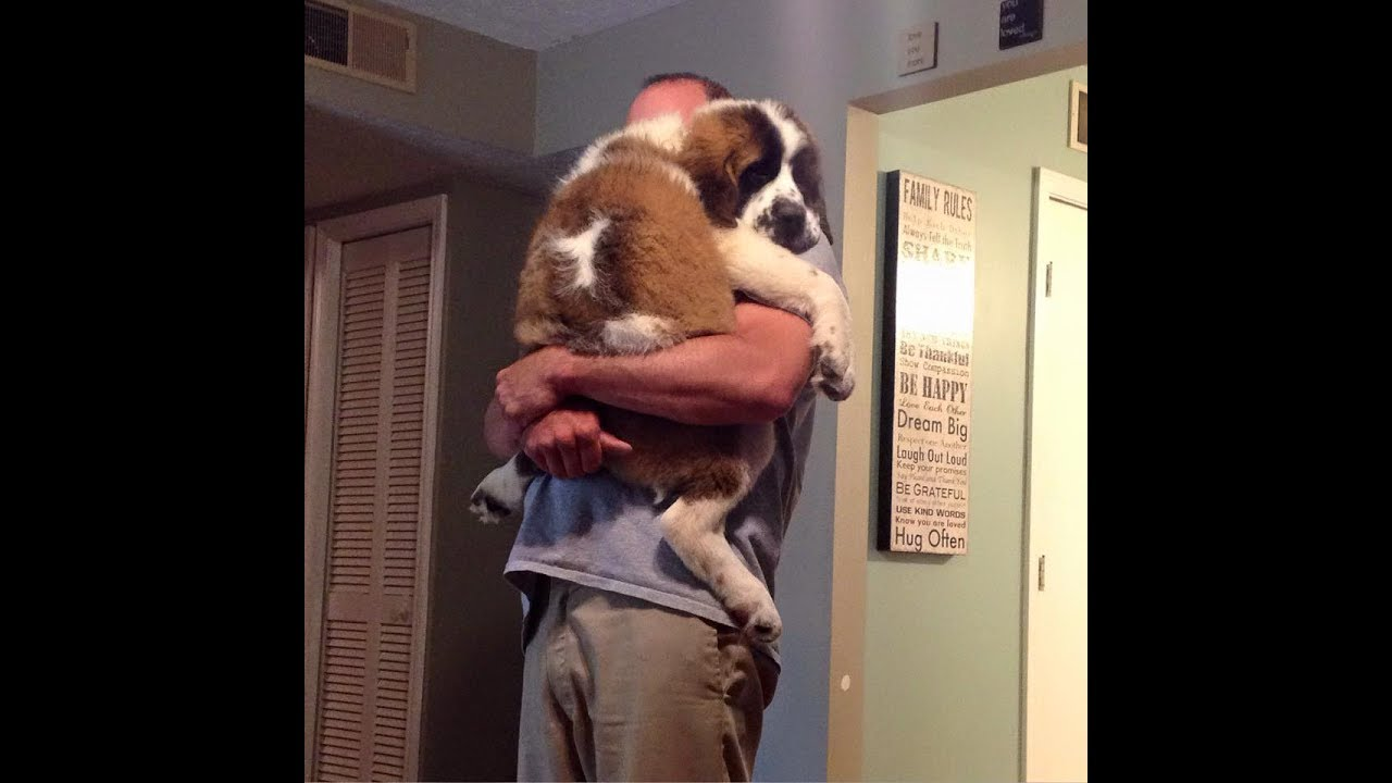 Soo Cute! Cats and dogs wants to be held like baby