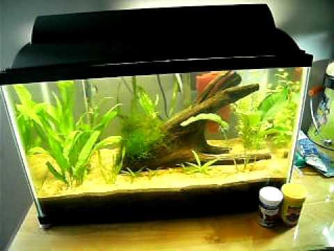 10 Gallon Update & Betta Fish Talk!