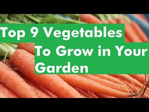 Top 9 Vegetables To Grow in Your Garden