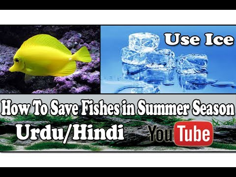How To save Fishes in Summer Season | Use Ice Urdu/Hindi