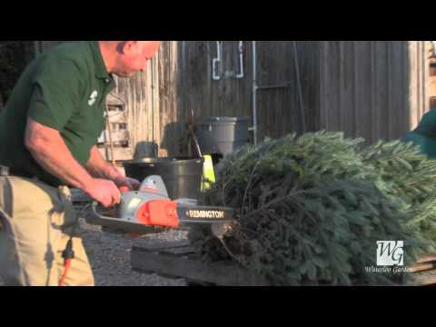 Caring for Your Fresh Cut Christmas Tree: Waterloo Gardens