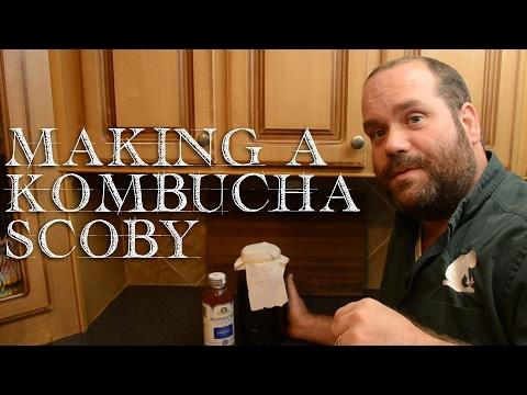 Starting a Kombucha SCOBY