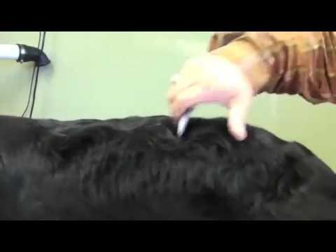 Grooming With Penny Shubert Eric Salas Part 6
