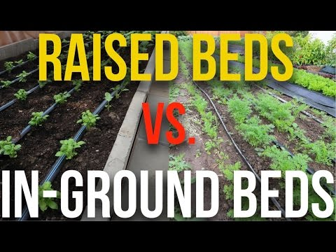 Raised Beds vs In-Ground Beds