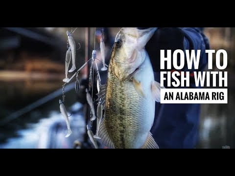 The ULTIMATE TIPS on catching transitioning bass with an Alabama Rig