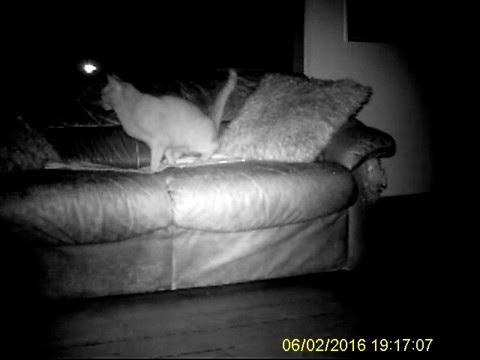 Cat Peeing On The Sofa!