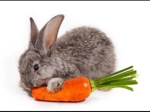 Rabbit TAKE THE BAIT