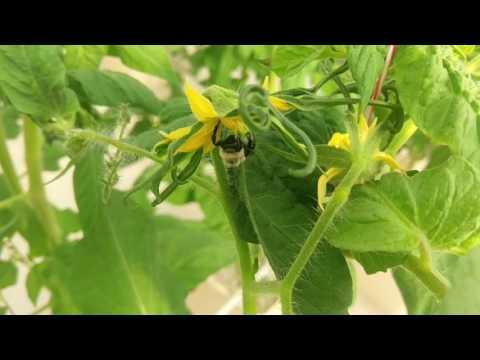 Pollination the Natural Way