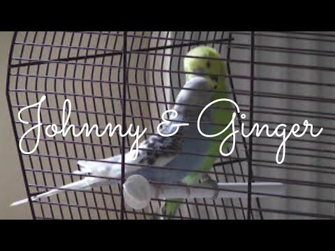Lovebirds having sex