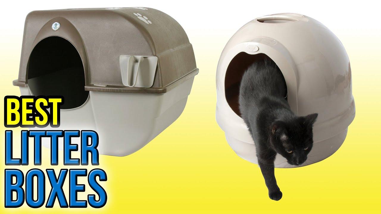 10 Best Litter Boxes 2016