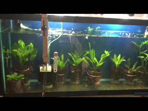 Simple routine water change