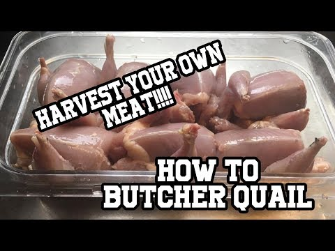 How to butcher quail (with dispatch)