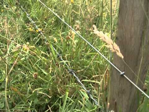 Goat Farm Fencing and Rural Fencing Tips For New Zealand | #5 Farm Mohair For Profit