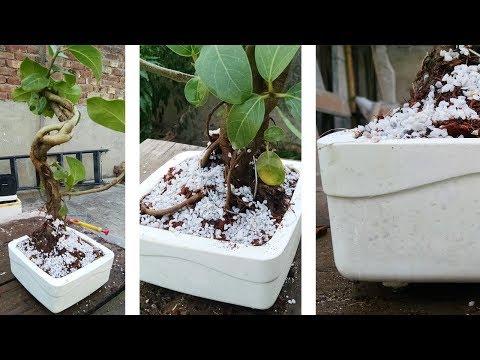 How to Make a Bonsai Pot? - BEAUTIFUL, White & Shiny!