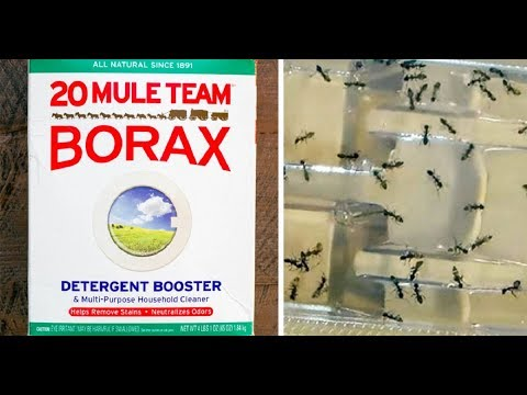 Use Borax And Get Rid Of Fleas, Roaches, Ants And Unwanted Pests From Home !